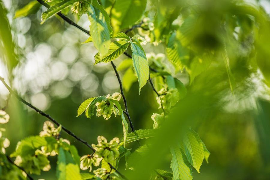Almens frön smakat gott. Foto: Istock