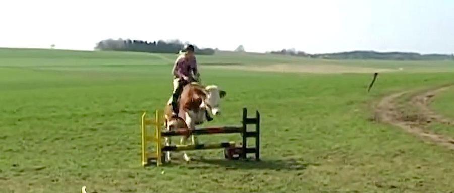 Den tyska flickan Regina Myer har lyckats träna sin ko till att hoppa över hinder.