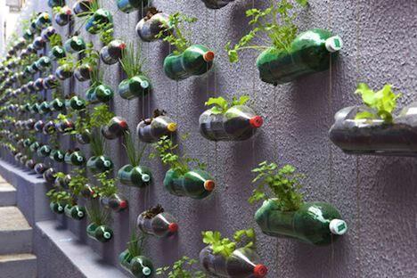 pet-plantering