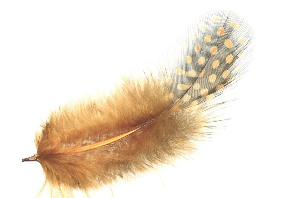 Orange of guinea fowl feather
