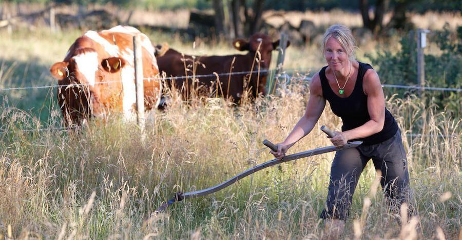 Ann-Louise har grannens kossor som publik .