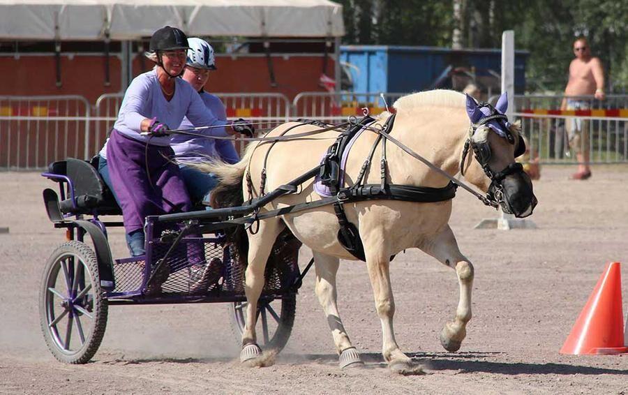 Twix är en skogsmulle som Åsa mest kör men även rider då och då nu när ryggen är bättre.