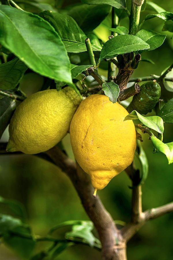 c-citron