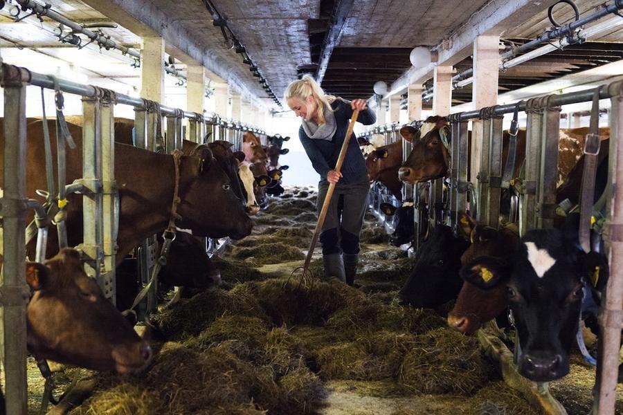 Många tunga sysslor ingår i Elins vardag som mjölkbonde, som att mocka i lagården.