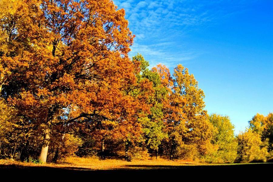 Land.se listar 10 skäl att älska hösten.