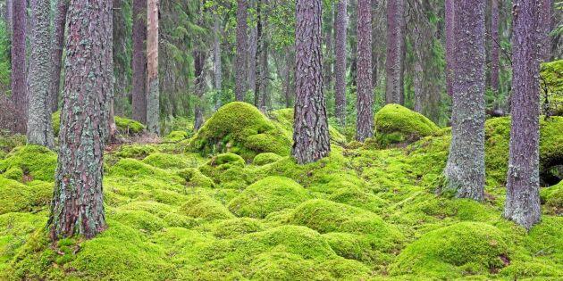 Skog är en hållbar investering