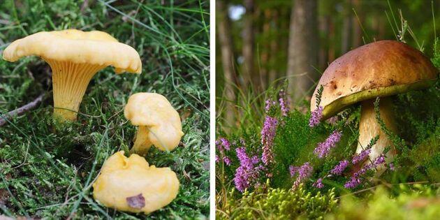 Ny bok avslöjar hemliga svampställen