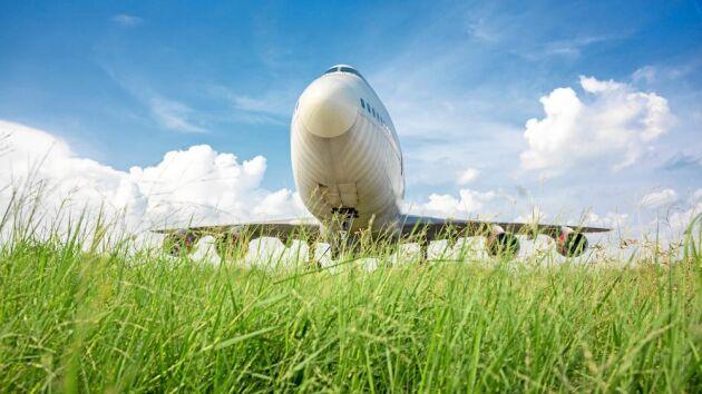 Gräsmarker vid våra flygplatser ger unika förutsättningar för ovanliga arter att överleva.