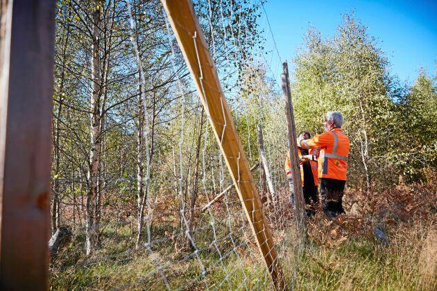 Deltagare i Naturnära jobb bygger en lucka i ett viltstängsel för att man ska kunna komma igenom.