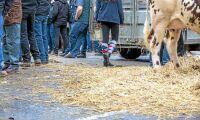 Dödläge efter franska mjölkprotester