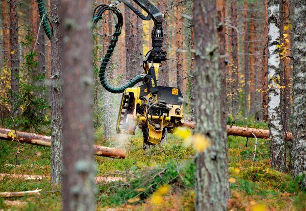 Hög efterfrågan gör att Sveaskog höjer priserna på timmer i Norr- och Västerbotten medan massavedspriset ligger still.