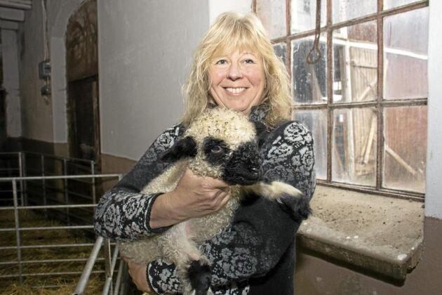 Ny ras. Marita Tauni i värmländska Väse har hämtat sin avelsbesättning svartnosfår i tyska Bayern.