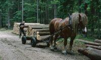 Hästar ger skonsammare gallring av träd