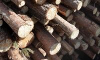 Styrelsen för virkesmätningsföreningar inte upp till Skogsstyrelsen