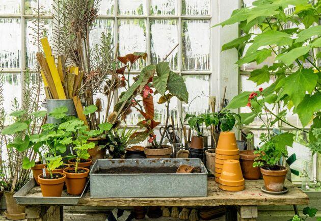 Dags att ge växterna en kärleksfull vårbehandling med ny jord och ny kruka!