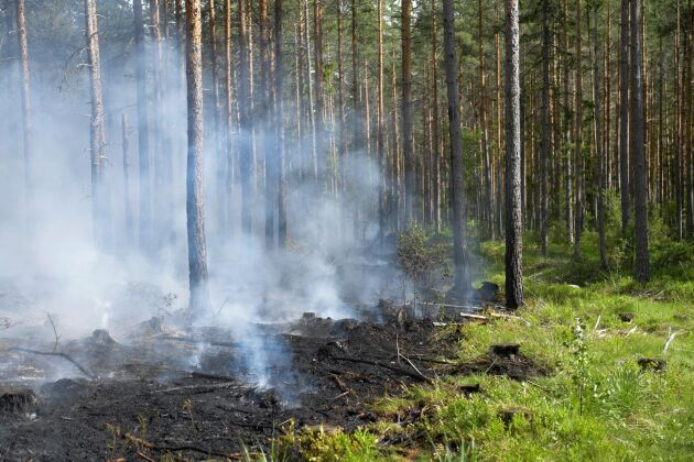 Det råder extrem risk för skogsbränder i norra Sverige. Arkivbild. Foto: Henrik Montgomery/TT
