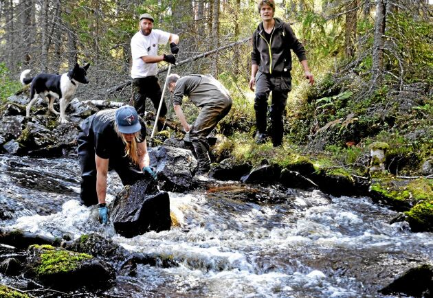Länsstyrelsen i Örebro har inga problem med att ta hjälp av frivilliga krafter i sitt vattenvårdsarbete. Bilderna är tagna i Fräsebäcken i september 2014. Längst fram syns länsstyrelsens vattenvårdshandläggare Daniel Bergdahl.