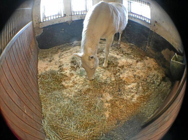 Vid sidan av vinsten att man kan se hästen i realtid kan den tillhörande appen även generera en graf över hur hästen rör sig och slå larm när något inträffar.