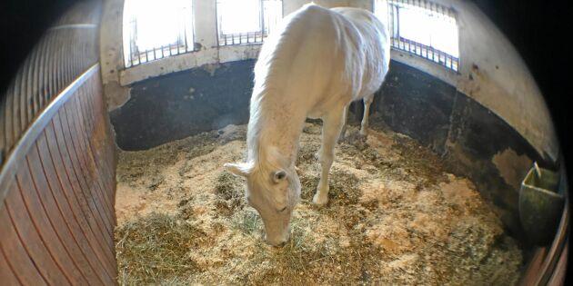 Nya kameran övervakar hästen