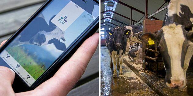 Ny app ska förebygga skador på mjölkgårdar