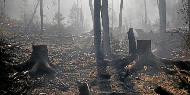 Regeringsbeslut i skogsbrändernas spår