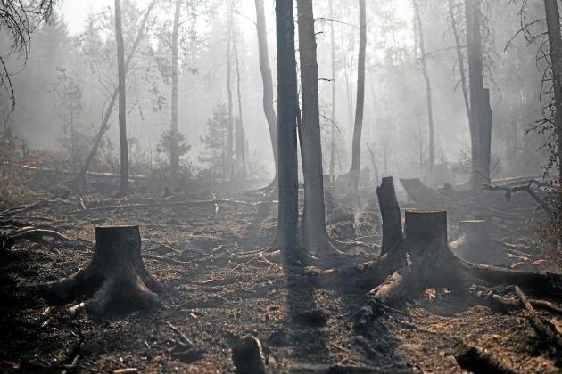 Eldhärjad skog i Tovåsen, Hälsingland. Arkivbild.