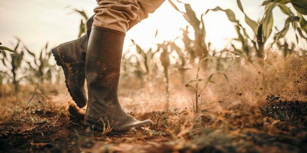 Så hårt slog torkan mot svenska bönders inkomst