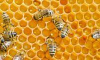 Misstänkt fusk med honung