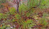 Multiskadorna i skogen ökar