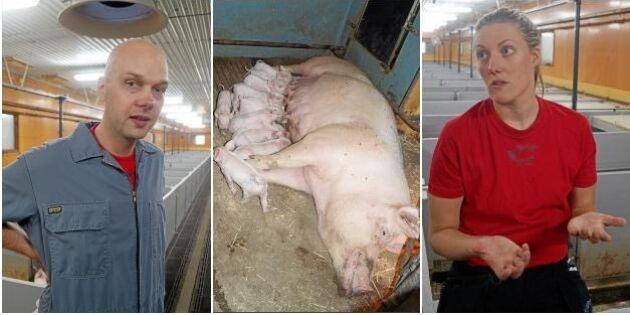 Bra läge för grisföretag – då slog de till