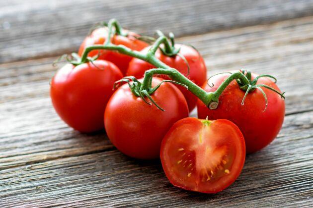 Smaken försvinner på riktigt om tomaten läggs i kylen.