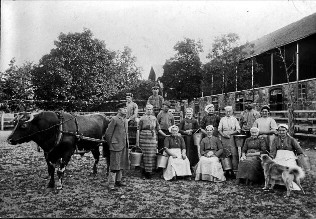 Tidstypisk bild. Mjölkerskor och lagårdskarlar, som var statare, står uppställda vid ladugården vid Julita gård i Södermanland.