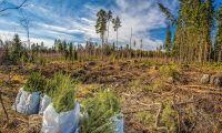 Miljoner till forskning om skog
