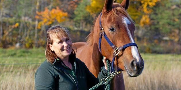 Hästföretagare hoppas på lagändring