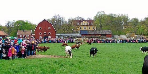 Efter folkstorm – nu slutar gården med betessläpp