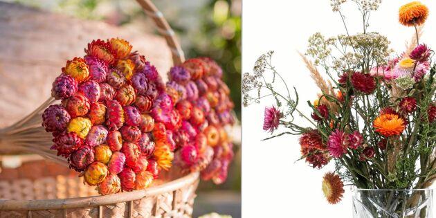 Torka eterneller – 4 sätt för olika blommor