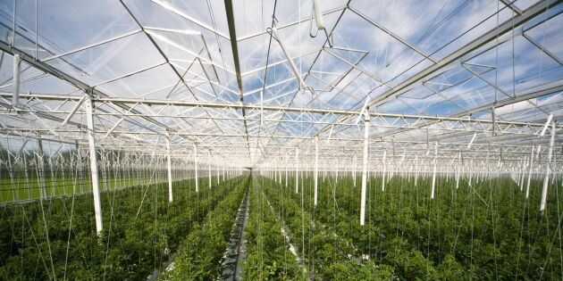EUs ekoregler bromsar expanderande växthusodling
