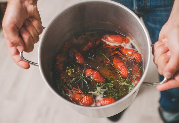 Har man turen att kunna få levande kräftor eller fiska dem själv behöver de kokas i ett gott spad för att verkligen komma till sin rätt. Foto: Istock