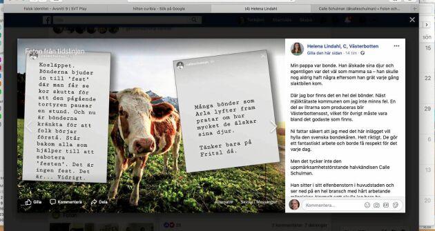 Centerpartiets landbygdspolitiske talesperson Helena Lindahl rasar mot medieprofilen Calle Schulmans angrepp på betessläpp.