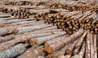 Skogsindustrin står stark i pandemin