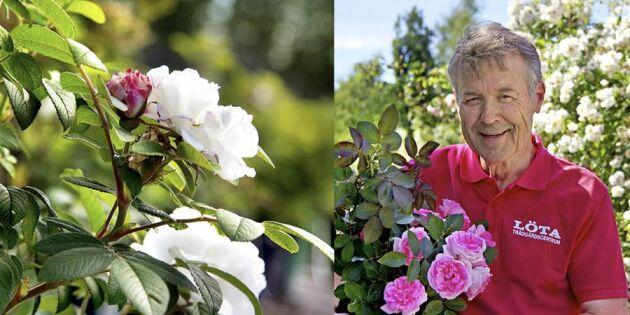 Rosenträdgården –enkel och elegant