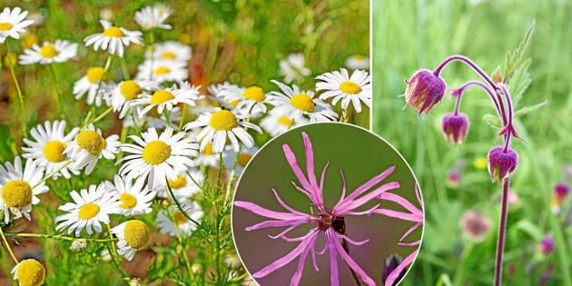 7 vilda växter att vårda i din trädgård