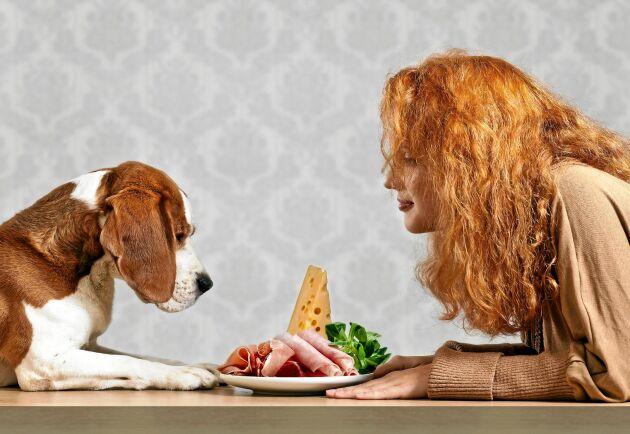 Ha eller inte ha? En liten bit ost är mer för hunden än du tror.