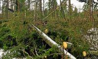 Skogsskadorna efter Alfrida klarnar