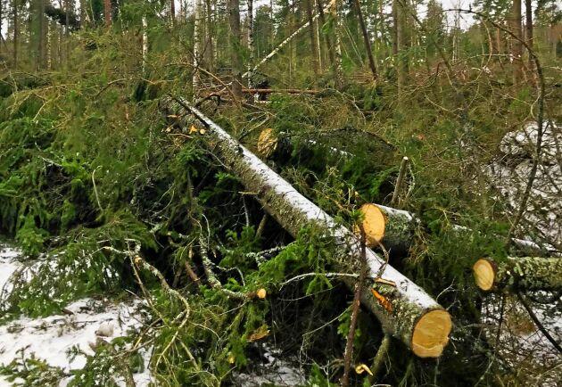 Skogsskador i Stockholms län efter stormen Alfrida.