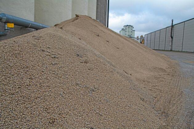 Spannmålen ligger i långa rader utanför anläggningen, här rör det sig om korn. Förutom direktleveranser har Tidan fått ta emot volymer från i första hand mottagningsplattan i Falköping.