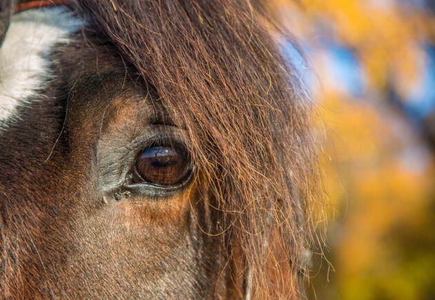 Årets Hästföretagare är en nyinstiftad utmärkelse som delas ut av Hästnäringens Nationella Stiftelse (HNS) och LRF Häst.