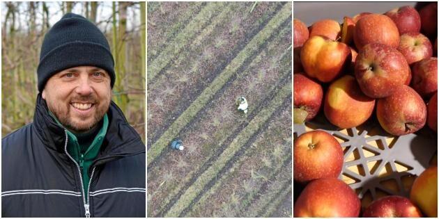 Vintern hektisk tid för äppelodlare – klipper 76000 träd