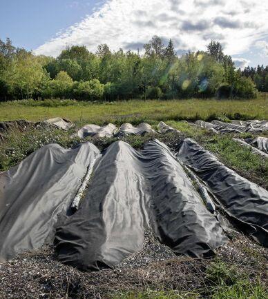 Under markduken ligger bäddarna och väntar på en ny odlingssäsong.