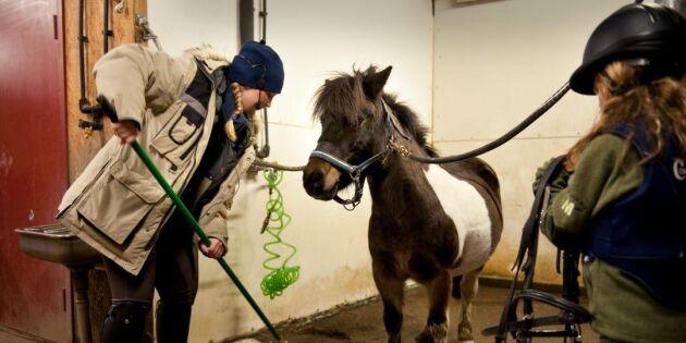 Unga med hästjobb lever farligt
